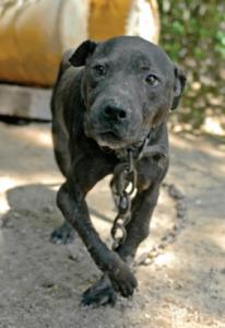 Kako opaziti znake pasjih borb in kaj lahko storite?