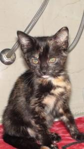 Kastracija in sterilizacija mačk - AniMa Animals Matter