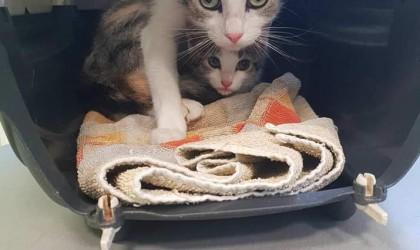 Mamica in mačji mladič